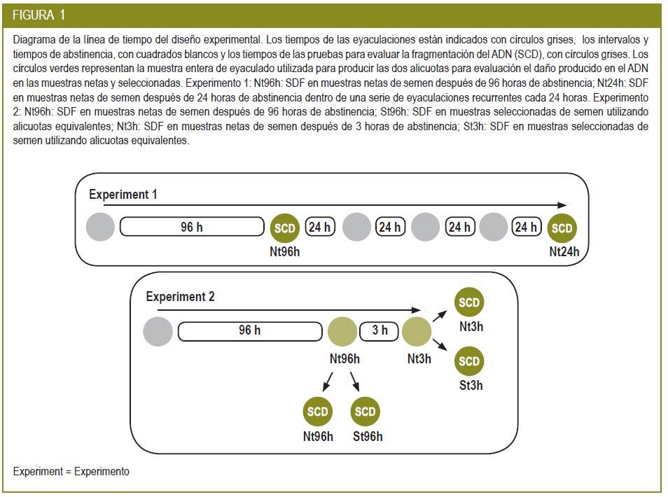 Revista Iberoamericana de Fertilidad:: Un periodo más corto de ...